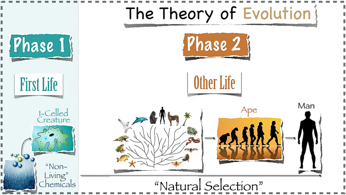 700_Evolution_and_Natural_Selection_04.27.14Evolution_slide_with_dotted_line_border.001
